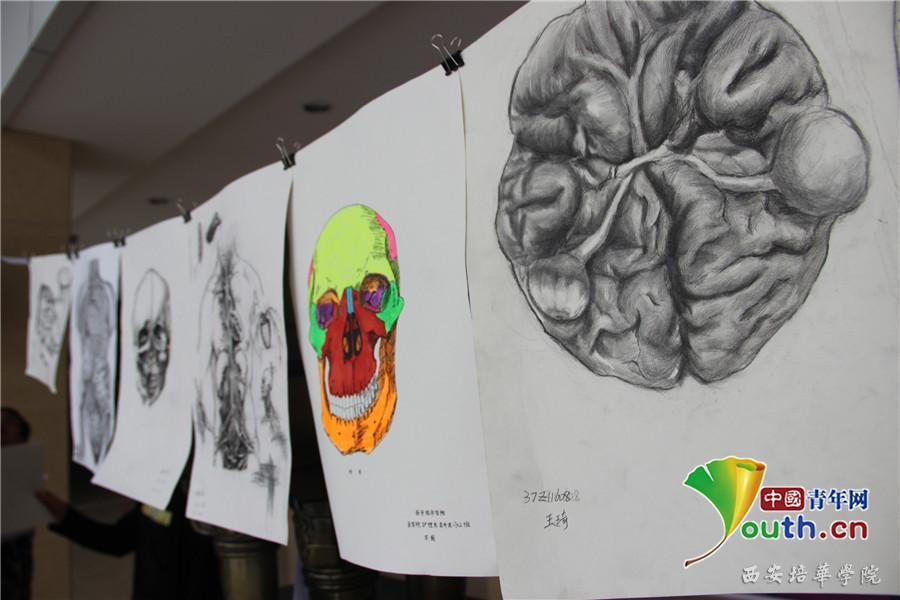 西安培华学院医学生们手绘了百余幅人体解剖图进行展览.吕一供图